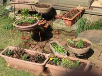 庭の手入れです - わたしの好きな物