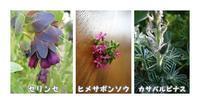 種蒔き - あおいそら