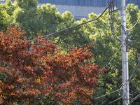 東京も秋です。10月25日(木)6549 - from our Diary. MASH  「写真は楽しく!」