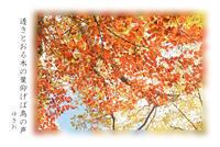透きとおる秋 - ゆきおのフォト俳句