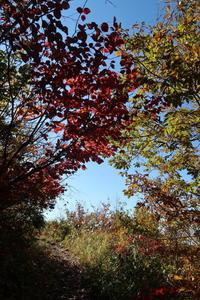 紅葉の取立山へ - yukoの絵日記