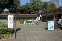 むさしの山草会展示会その1 - 野山の花たち