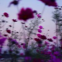 「地」の時代から「風」の時代へ??(地星座が語る) - Miemie  Art. ***ココロの景色***