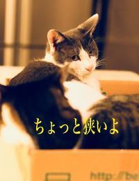 にゃんこ劇場「ギュウギュウ詰め」 - ゆきなそう  猫とガーデニングの日記