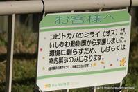 名古屋でがんばれ コビトカバのミライくん - こらくふぁーむ
