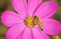 蜜蜂 - ネコと裏山日記
