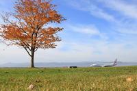 やさしい写真~旭川空港~ - 自由な空と雲と気まぐれと ~from 旭川空港~
