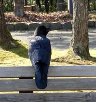 神楽岡公園のベンチでくつろぐ・・・ - 村田ピアノ教室のブログ ~北海道旭川市より~