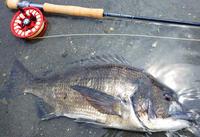 プロショップ・SABALO主催のソルトフライタイイングイベントのご報告 - Fly Fishing Total Support.TEAL