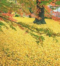 風景 回想⑦)秋の菊池渓谷=熊本県菊池市 - チャレンジ! 日々の散歩道