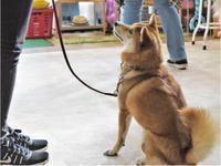 犬のしつけ方教室10/25 - SUPER DOGS blog