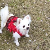 愛犬との別れ - 風とアオダモ、モンステラ