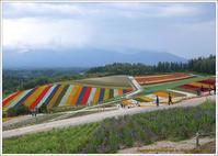 北海道の秋-1美瑛四季彩の丘・青い池・青い川 - 野鳥の素顔 <野鳥と日々の出来事>