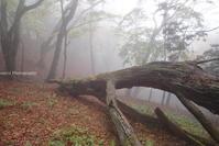 雨と霧の北部台高縦走路 - ratoの山歩き