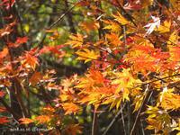 秋が燃える - Photo Album