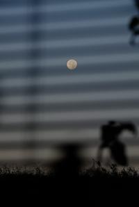 ブラインド越しの月 - ブナの写真日記