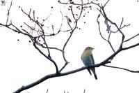 難敵ムギマキ - 野鳥公園
