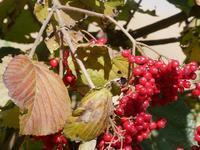 ときがね湖の秋、木の実 - 花と葉っぱ