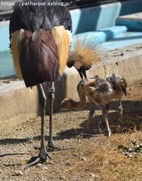 2018年10月天王寺動物園その1 - ハープの徒然草
