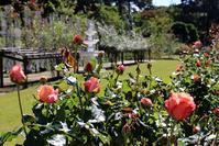 10/31(水)「秋の生田緑地ばら苑」ボランティアガイドをさせて頂きます。 - バラとハーブのある暮らし Salon de Roses