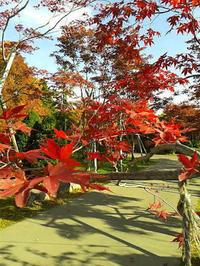 紅葉を見に出かけました。 - 楽しい わたしの食卓