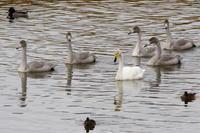 今日の長都沼 - 今日の鳥さんⅡ