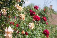 秋色に染まるトレジャーガーデンⅢ - 季節の風を追いかけて