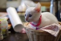 新しい子猫が家にきました - ~Day after day~