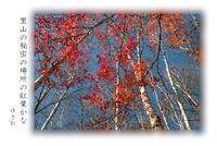 紅葉と白樺林 - ゆきおのフォト俳句