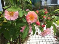 庭の花も少なくなって - 花の自由旋律