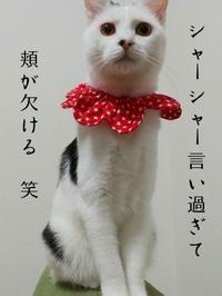 シャーシャー祭in大阪② - 素人木工雑貨と犬猫日記