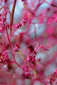 ホウキ草 - 美は観る者の眼の中にある