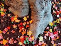 落ち葉は秋の顔 - 花散歩写真 in Vancouver