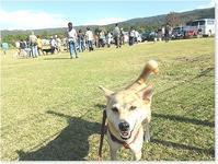 今日はペロドッグズホームの運動会でした! - 番犬ハナとMIX犬サクのおさんぽ毎日