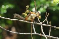 ホンドリス - 近隣の野鳥を探して