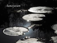 秋の光線 - こもれびの森