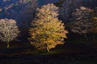 秋色の縦走路笹ヶ峰~桧塚 - 峰さんの山あるき