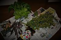 北摂の家庭菜園10月末の収穫 - 今夜の夕食