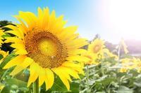 北風と太陽 - ココロが軽くなるメンタルカウンセリング講座