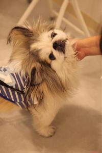 つられちゃう - 宮城県富谷市明石台  くさか動物病院ブログ