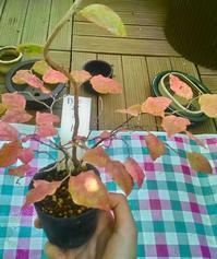 秋の植え替え - 俺は、都会のベランダー。