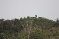 大きな川で出合えた鳥達 - 私の鳥撮り散歩