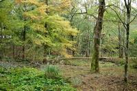 晴れ・6℃の朝・・くつきの森も色づく朽木小川・気象台より - 朽木小川・気象台より、高島市・針畑・くつきの季節便りを!