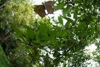 埼玉県中北部の公園のクロコノマチョウほかin2018.09~10 - ヒメオオの寄り道