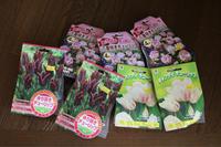 久しぶりの園芸店 - my small garden~sugar plum~