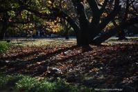 落ち葉 - Noriko's Photo  -light & shadow-