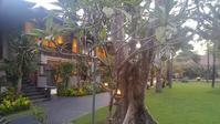 2018バリ~Padma Resort Legian - VAMOS!