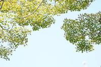 「黄色を足して-大山崎山荘美術館庭園Asahi Beer Oyamazaki Villa Museum of Art ー」 - ほぼ京都人の密やかな眺め Excite Blog版