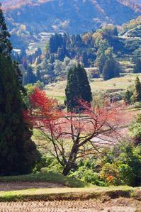 桜の紅葉 - 松之山の四季2