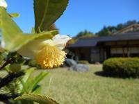 2018年11月の藤田記念庭園茶会開催のお知らせ - Tea Wave  ~幸せの波動を感じて~